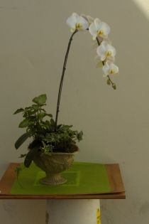 Less is sometimes more. Orchid plants are great centerpieces.