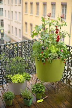 Grand pot Tokyo pour cultiver un potager au balcon - Botanic Terrace Garden, Garden Planters, Balcony Gardening, Garden Bed, Farm Gardens, Outdoor Gardens, Small Back Gardens, Garden Diy On A Budget, Balcony Plants