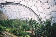 Floresta Hidropônica