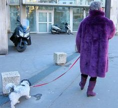 In Paris Dogs Rule.