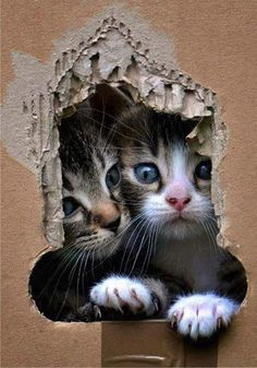...the great escape (from the other side of the wall :)