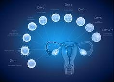 La continua mejora de los protocolos de calidad en los laboratorios de embriología ha permitido que en la actualidad cada vez más centros de reproducción asistida