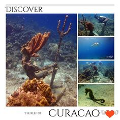 Great experience at Curacao ...  #scuba #relaxedguideddives #fun #tauchen #reef #diving #curacao