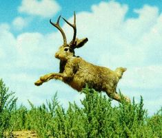 jackelope pics   Cryptomundo » For Easter: Thoughts of Jackalopes & Wolpertingers