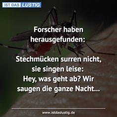 Forscher haben herausgefunden: Stechmücken surren nicht, sie singen leise: Hey, was geht ab? Wir saugen die ganze Nacht... Live Love, Lol, Funny, Horror, Movies, Movie Posters, Tips, Humor, Funny Sarcastic