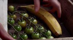 Hoe laat ik groene tomaten rijpen?