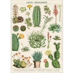 Afbeeldingsresultaat voor succulent poster