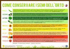 Come conservare i semi dell'orto