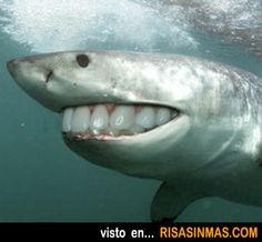 Sonrisa de tiburón.