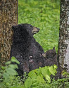 Nursing Bear by Daniel Parent on 500px