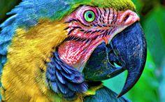 ¿Como veria si fuera un... loro? La visión lateral les da una percepción relativamente pobre de la profundidad, lo cual compensan mirando los objetos desde dos ángulos diferentes moviendo la cabeza hacia arriba y hacia abajo. Por otro lado, la visión lateral les da un campo de visión más grande con el cual pueden detectar enemigos con mucho más facilidad que un animal con visión binocular.  ¡Nos quedamos con sus colores!