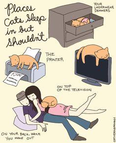 Kyllä kissa tietää. Se vaan ei välitä.