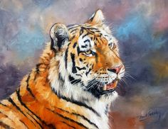 TIGER Superb New DAVID STRIBBLING  Oil Painting