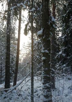 Eroon täydellisyyden tavoittelusta - ole pensas, jos et voi olla puu | Kodin Kuvalehti
