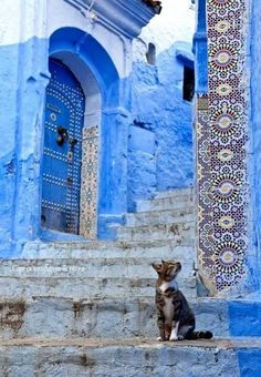 Blue walkway + a cat repinned by www.smgdesign.de #smgdesignselect