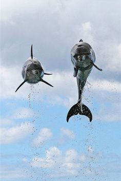 Flying dolphins wouwwww