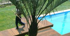A natural swimming pool completely eliminates the need for chemicals and constant cleaning. We are installers of Natural Swimming Pools Natural Swimming Pools, Cool Deck, Wooden Decks, Decking, Modern Contemporary, Landscapes, Koi Ponds, Creative Design, Outdoor Decor