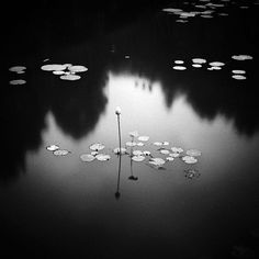 Hengki Koentjoro. Lotus