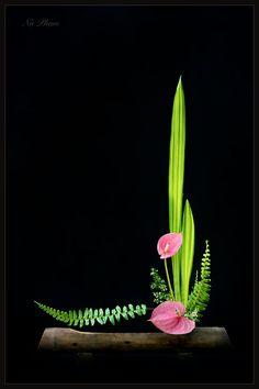 Tropical Floral Arrangements, White Flower Arrangements, Ikebana Flower Arrangement, Ikebana Arrangements, Arte Floral, Deco Floral, Most Beautiful Flowers, Elegant Flowers, Exotic Flowers