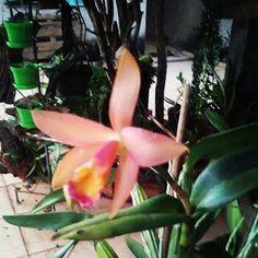Arteirices da Dru: A natureza é mesmo perfeita, abriu flores, minha o...