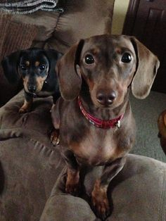 Sweet Doxies!
