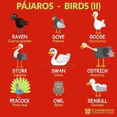 Spanish Grammar, Spanish English, English Tips, English Vocabulary Words, Spanish Language Learning, Learn English Words, English Phrases, English Study, Learning English For Kids