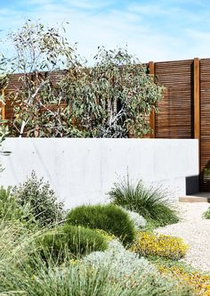 If you live in a dry and arid climate then your desert landscaping is going to take a little more planning than some other parts of the country. desert landscaping will have to work with a plan that includes only plants and trees that Australian Native Garden, Australian Garden Design, Landscape Design Plans, Landscape Architecture, Landscape Materials, Coastal Gardens, Modern Gardens, The Design Files, Contemporary Landscape