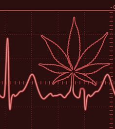 """THC May Protect Against Heart Attacks: Furthermore, the study showed a lack of desensitization from repetitive THC intake, as continuous THC treatment over a 3-week period seemed to offer the same level of benefit. In light of this, the researchers suggested that THC """"may even prove beneficial as a chronic treatment for individuals who are at high risk of myocardial infarction [heart attack] or other cardiac diseases."""""""