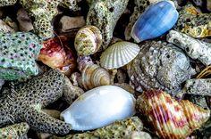 Dead shell-Marina06Juli2013-08342
