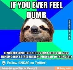 Sloth jokes although this is a little sad!