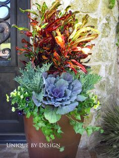 Mammy Croton, ornamental cabbage / kale, ivy and violas. A Great Fall Container Garden! Fall Planters, Outdoor Planters, Garden Planters, Outdoor Gardens, Big Planters, Container Flowers, Container Plants, Container Gardening, Vegetable Gardening