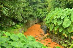 #Azores #SaoMiguel #PocaDaBeija #furnas #thermal