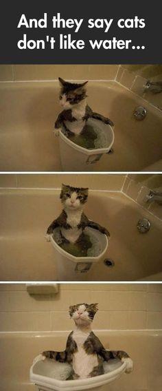 A very peculiar cat...
