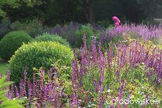 Kolorowy ogród na piasku - strona 584 - Forum ogrodnicze - Ogrodowisko Plants, Gardening, Lawn And Garden, Plant, Planets, Horticulture