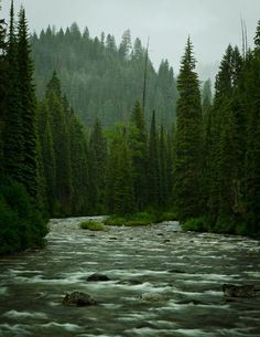 One of thousands of wild rivers and streams all over the state of Montana