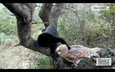 Owl & cat - unlikely friends! Jurrassic Park, Owl Cat, Unlikely Friends, Odd Couples, The Pussycat, I Love Cats, Beautiful Birds, Best Friends Forever, Animal Pictures