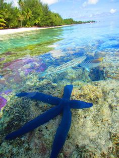 Rarotonga, Cook Islands - better diving than the GBR.