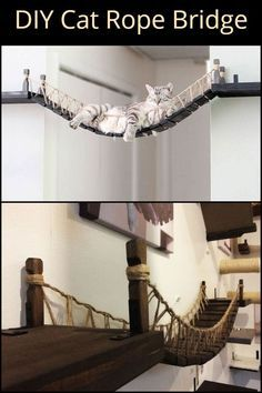 This DIY cat rope bridge is a really nice project for your beloved pet! - This DIY cat rope bridge is a really nice project for your beloved pet! This DIY cat rope bridge is a really nice project for your beloved pet! Animal Room, Cat Wall Shelves, Shelves For Cats, Rope Bridge, Cat House Diy, Cat Tree House, Diy Cat Tree, Cool Cat Trees, Cat Playground