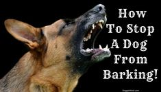 How To Stop A Dog From Barking - Are you trying to figure out how to get your dog to stop barking? Take a look at our site because we have excellent information on how to train a dog not to bark.