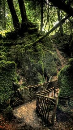 Puzzlewood ~ is an ancient woodland site, Forest of Dean, Gloucestershire, England. Said to be Tolkien's inspiration for the forests of Middle-earth, and for Rowling's Forbidden Forest. Beautiful World, Beautiful Places, Beautiful Forest, Foto Nature, Forest Of Dean, Forest Path, The Forest, Forest Trail, Forest Floor