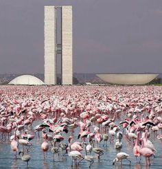 Urban Landscape | Flamingos and the Congress Nacional | Basilia, Brazil | Architect Oscar Niemeyer