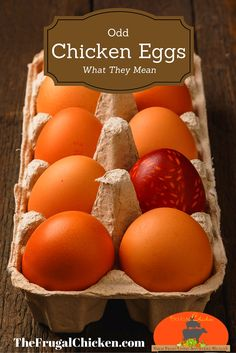 Weird chicken eggs you might encounter in your coop and what  they mean about your hen's health.