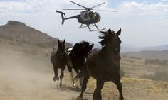 Activist Groups Slam Proposal To Kill More Than 44,000 Wild Horses | Huffington Post