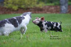 Like Animals, Farm Animals, Cow, Random, Photography, Photograph, Fotografie, Cattle, Photoshoot