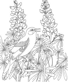 Mockingbird And Bluebonnet Texas State Bird Flower Coloring Page From Category Select