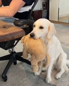 Cute Baby Animals, Funny Animals, Cute Puppies, Dogs And Puppies, Pet Travel, Labradors, Dog Photography, Dog Life, I Love Dogs