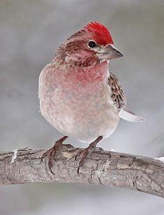 2012 Great Backyard Bird Count, Feb. 17-20