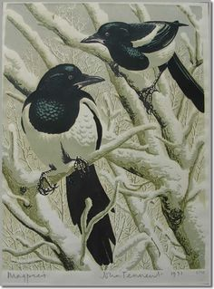 Magpie  Google Image Result for http://www.britishsportingart.com/images/prints_gallery/john_tennent_magpie_print.jpg