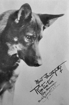 In 1918, a young American soldier emerged from the ruins of a military kennel with a frantic, famished German Shepherd and her five newborn pups. Their survival on the battlefield in France was almost miraculous; Lee Duncan, their saviour, kept...