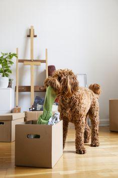 Miten tehdä lemmikin muutosta mukava? Muutto voi stressata koiraa tai kissaa jopa enemmän kuin ihmistä. Blogissa Evidensian asiantuntija jakaa vinkkinsä.
